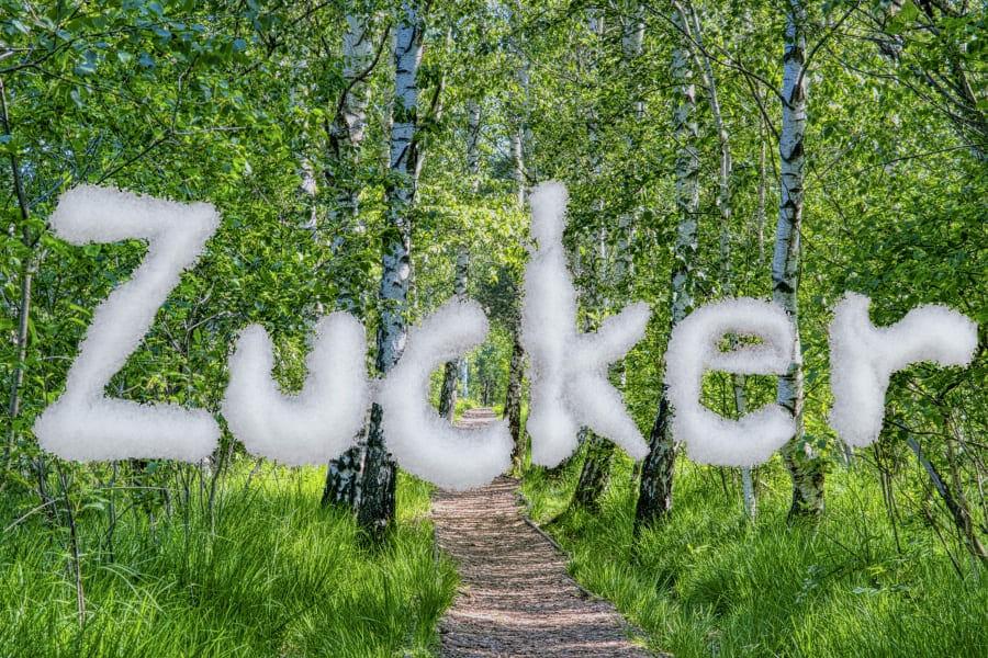 Die Süße des Lebens: Birkenzucker, Xylit