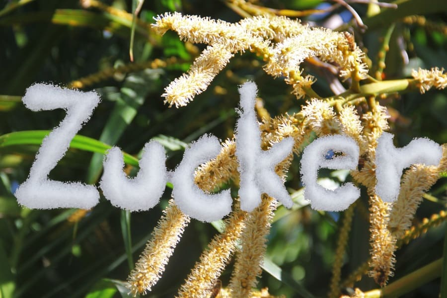 Süße des Lebens Kokosblütenzucker