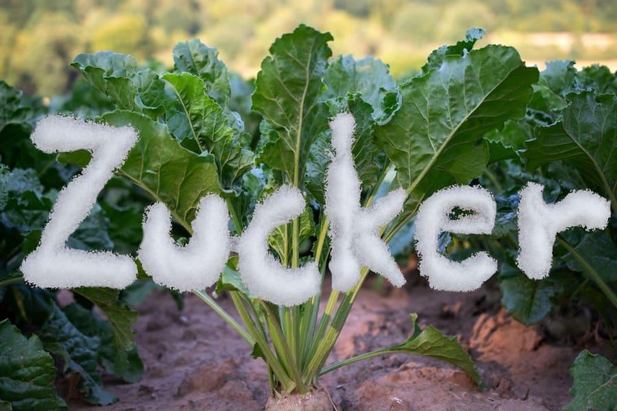 Süße des Lebens: Allgemeines über Zucker