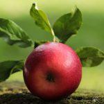 Äpfel+