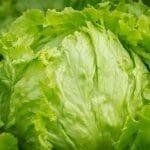 Eisberg-Salat+